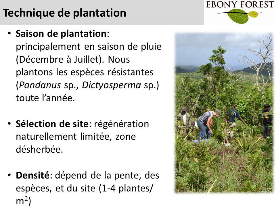 Technique de plantation