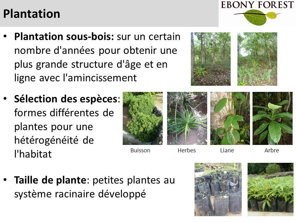 Plantation Plantation sous-bois: sur un certain nombre d années pour obtenir une plus grande structure d âge et en ligne avec l amincissement.