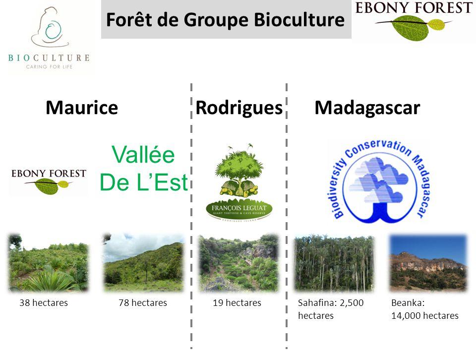 Forêt de Groupe Bioculture