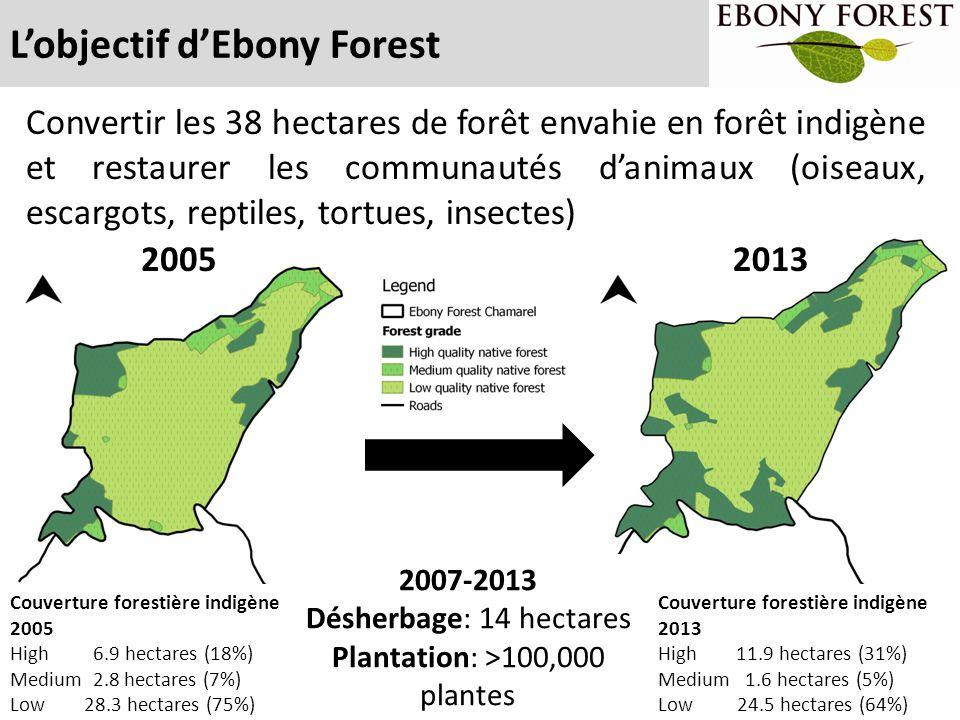 Plantation: >100,000 plantes