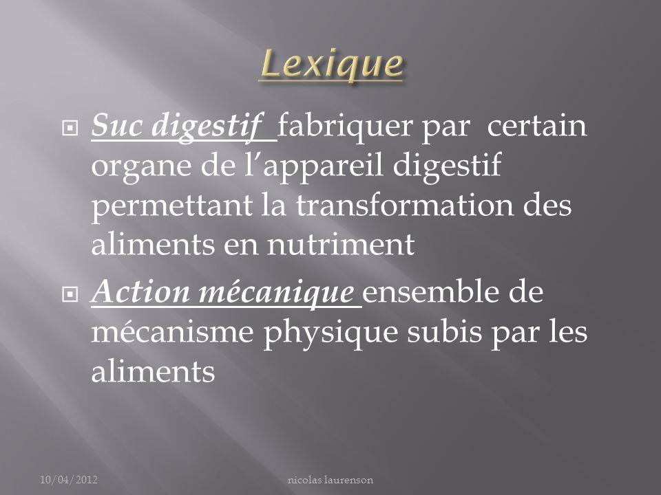 Lexique Suc digestif fabriquer par certain organe de l'appareil digestif permettant la transformation des aliments en nutriment.