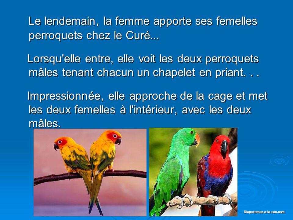 Le lendemain, la femme apporte ses femelles perroquets chez le Curé...