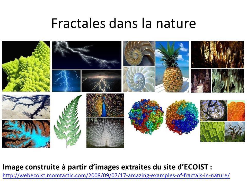 Fractales dans la nature