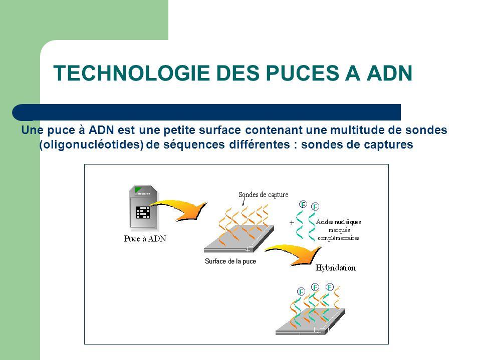 TECHNOLOGIE DES PUCES A ADN