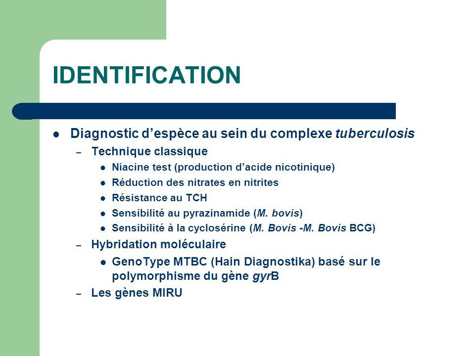 IDENTIFICATION Diagnostic d'espèce au sein du complexe tuberculosis