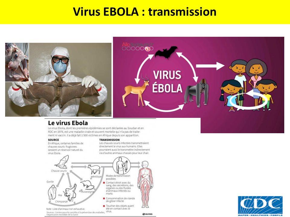 Virus EBOLA : transmission