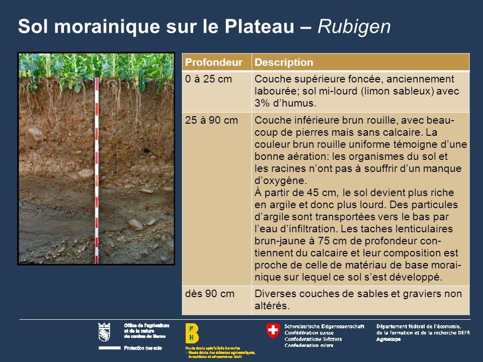 Sol morainique sur le Plateau – Rubigen