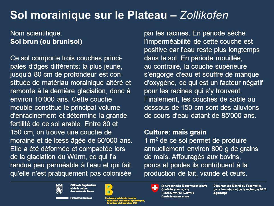 Sol morainique sur le Plateau – Zollikofen