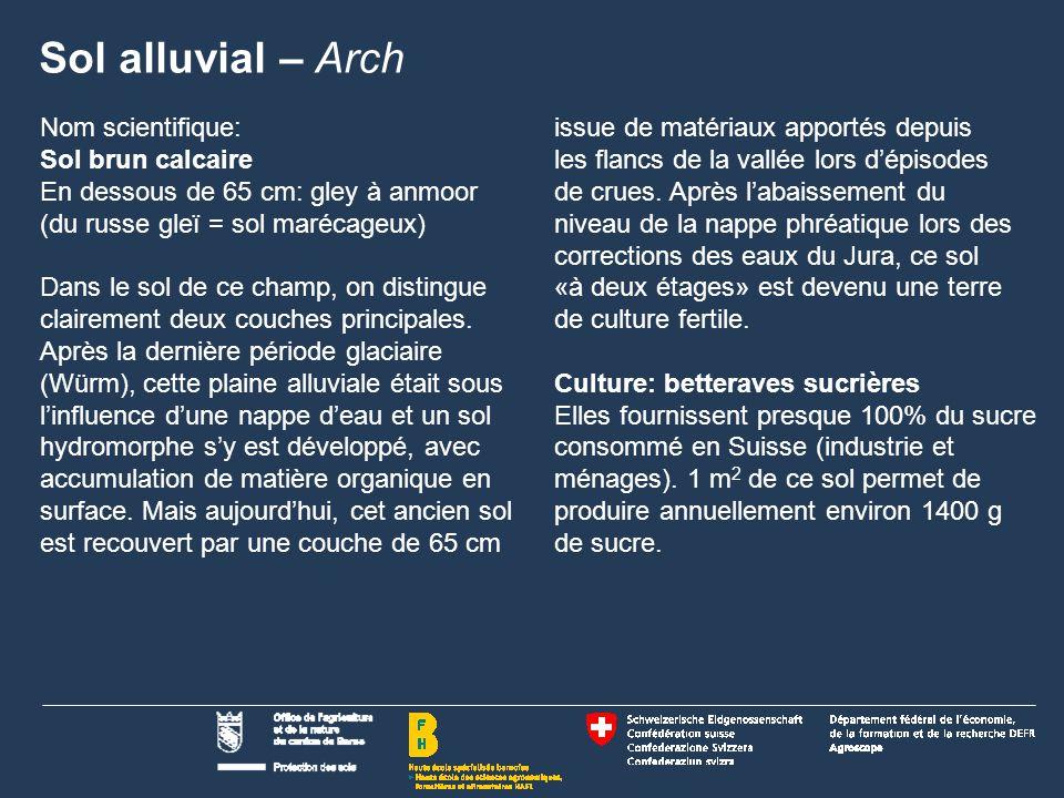 Sol alluvial – Arch