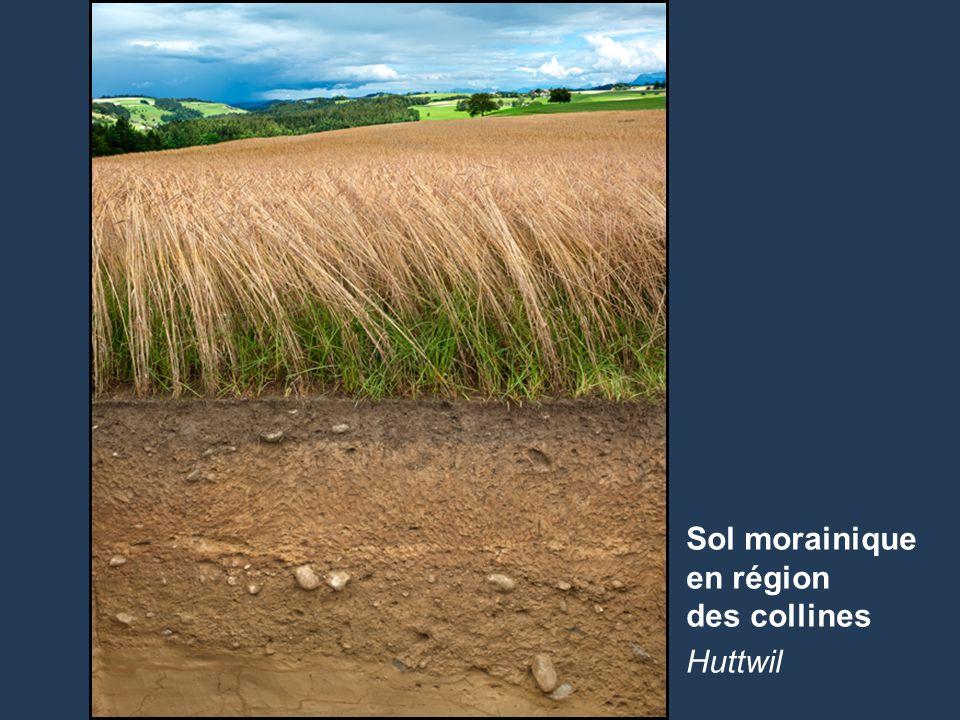 Sol morainique en région des collines