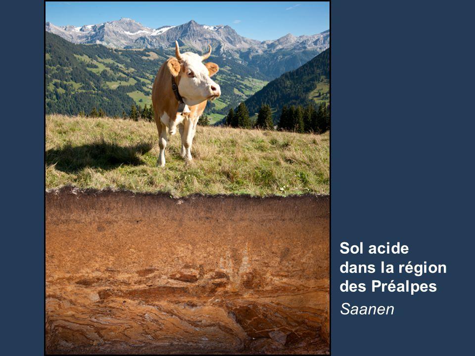 Sol acide dans la région des Préalpes