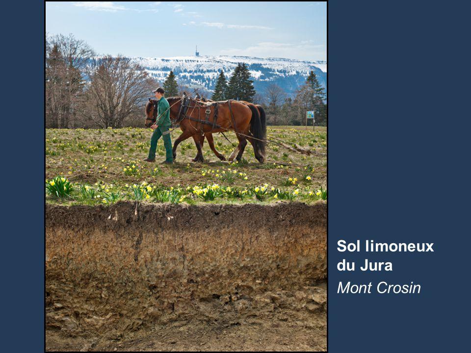 Sol limoneux du Jura Mont Crosin