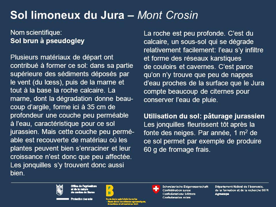 Sol limoneux du Jura – Mont Crosin