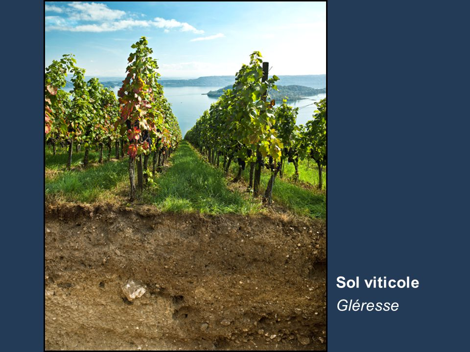 Sol viticole Gléresse
