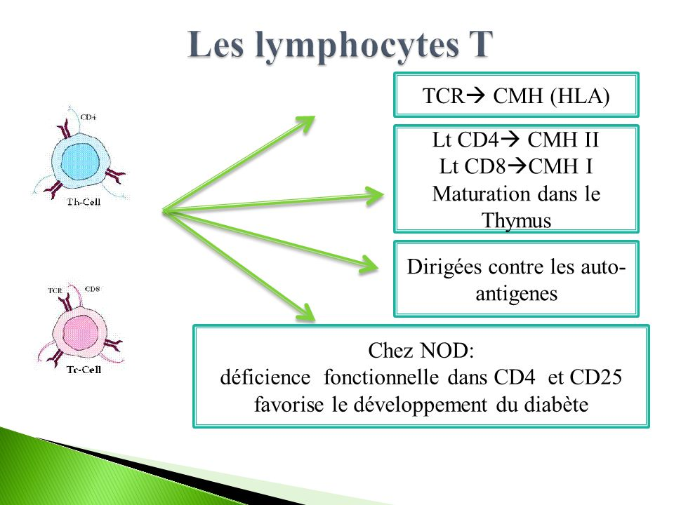 Les lymphocytes T TCR CMH (HLA) Lt CD4 CMH II Lt CD8CMH I