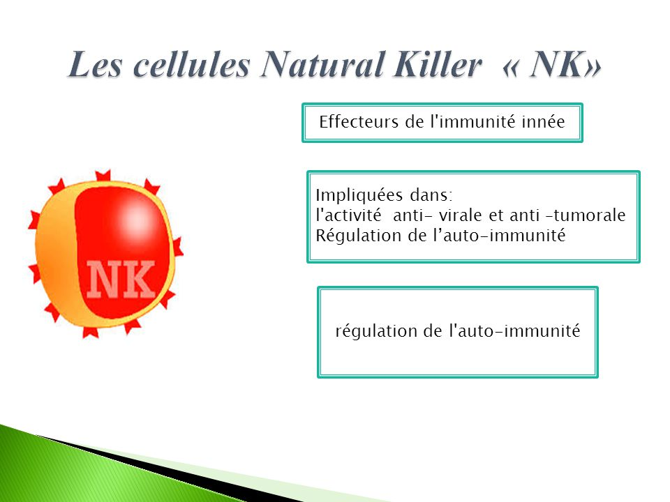 Les cellules Natural Killer « NK»