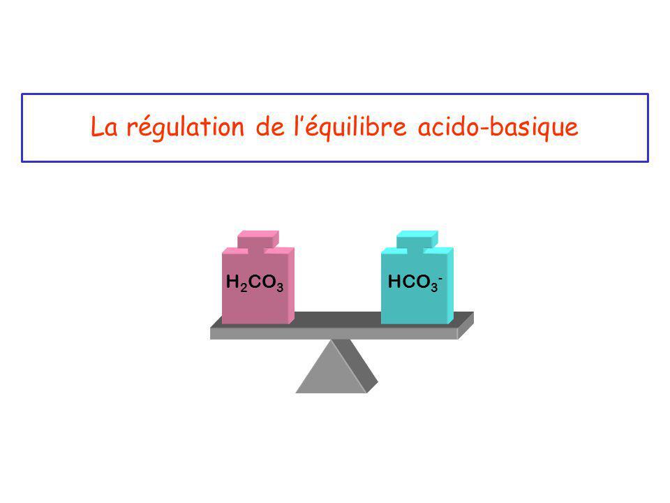 La régulation de l'équilibre acido-basique