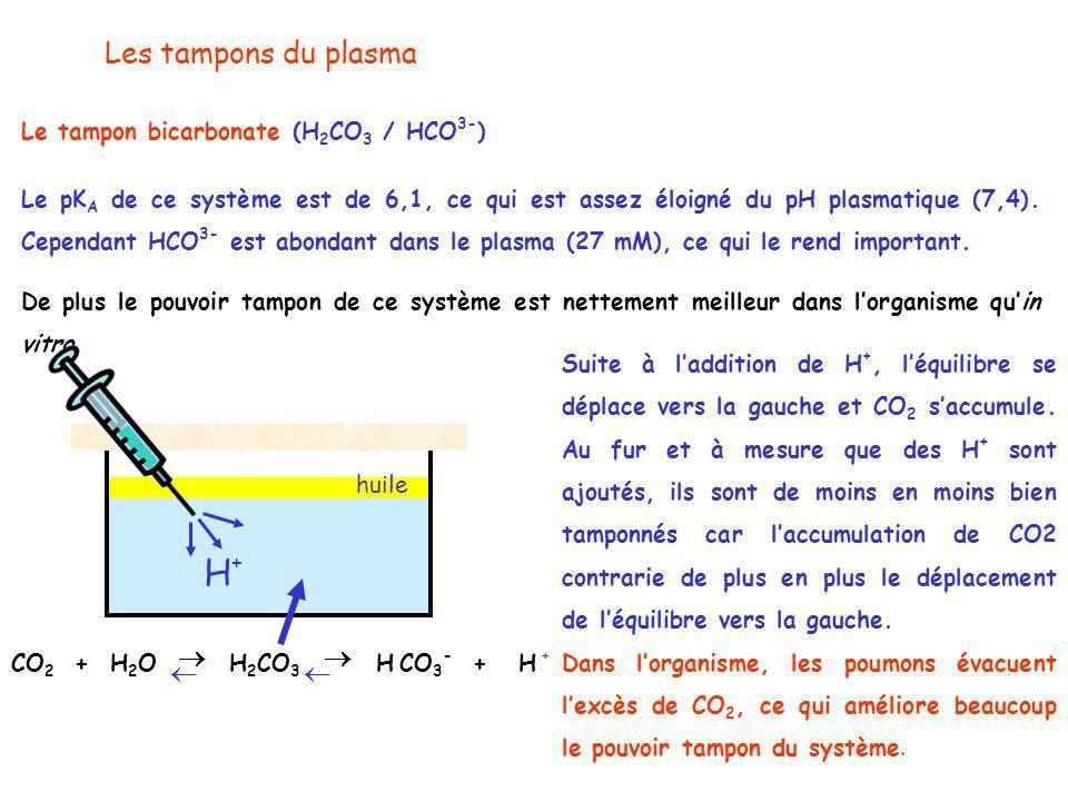  H+ Les tampons du plasma Le tampon bicarbonate (H2CO3 / HCO3-)