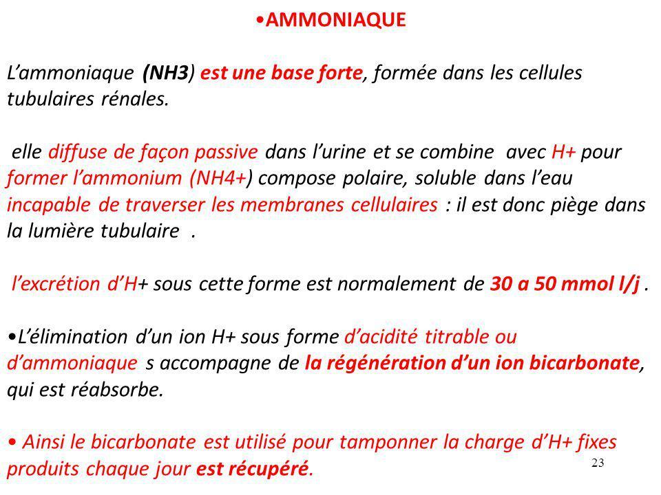 AMMONIAQUE L'ammoniaque (NH3) est une base forte, formée dans les cellules tubulaires rénales.