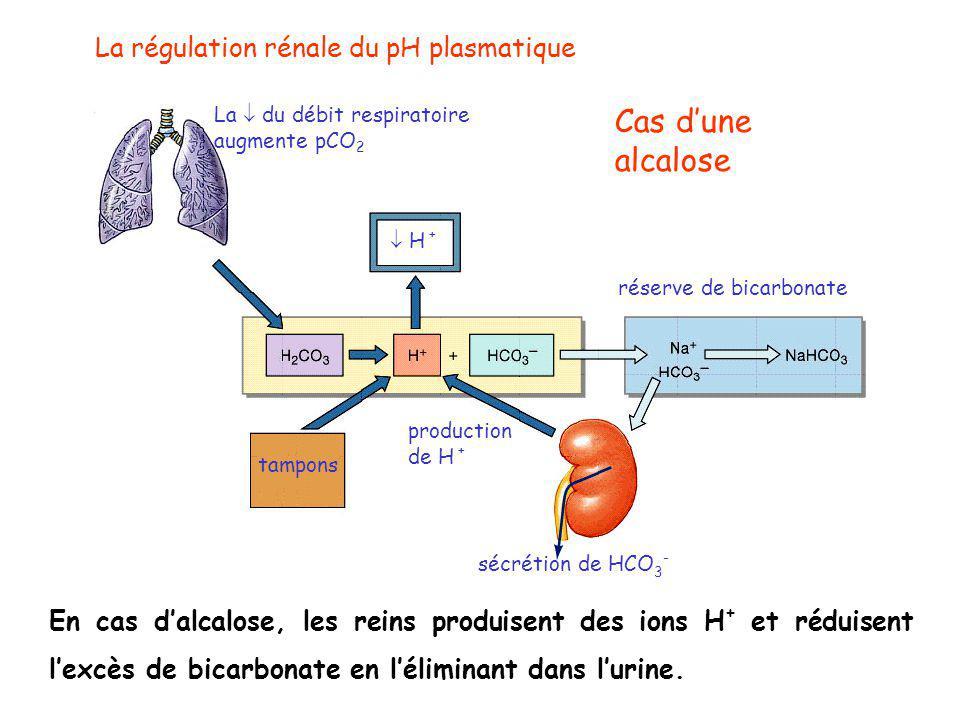 Cas d'une alcalose La régulation rénale du pH plasmatique