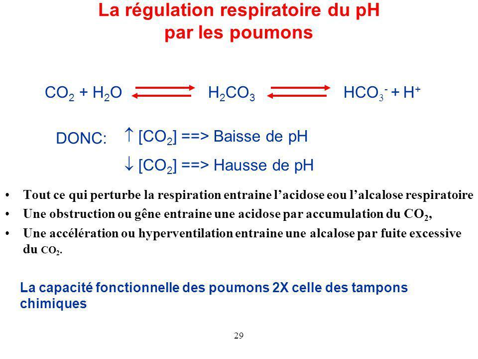 La régulation respiratoire du pH par les poumons