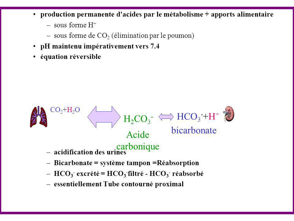 HCO3-+H+ H2CO3- bicarbonate Acide carbonique