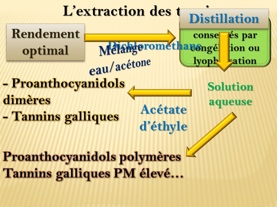 L'extraction des tannins