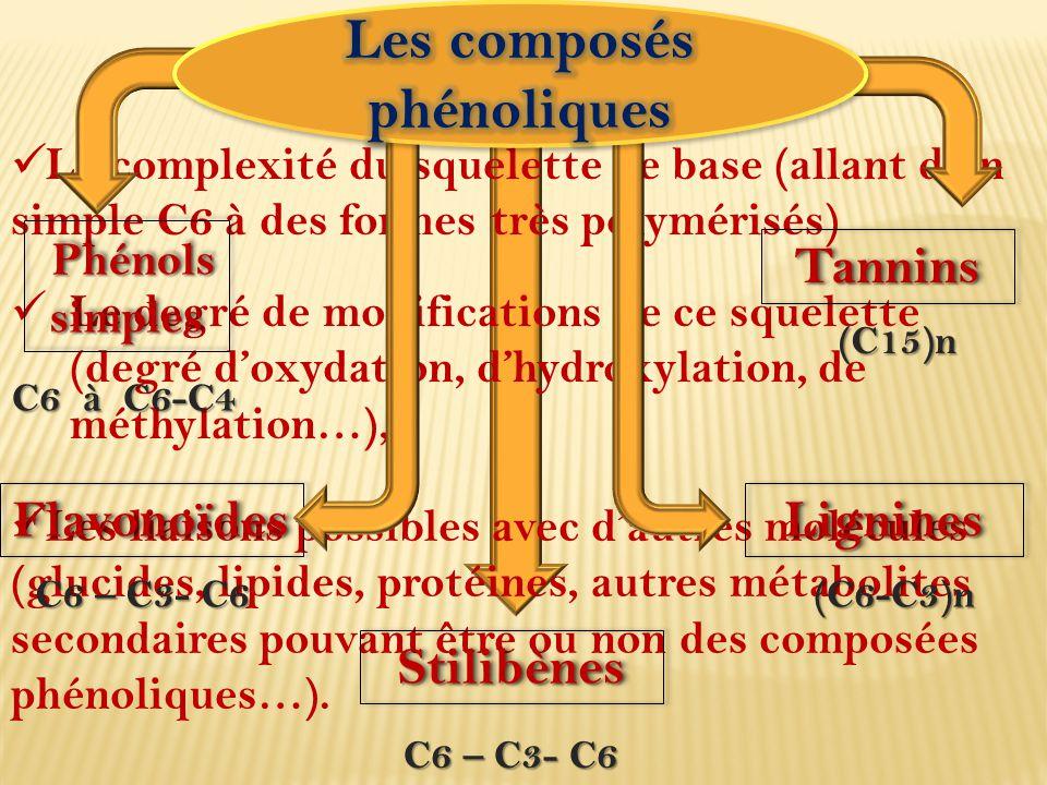 Les composés phénoliques