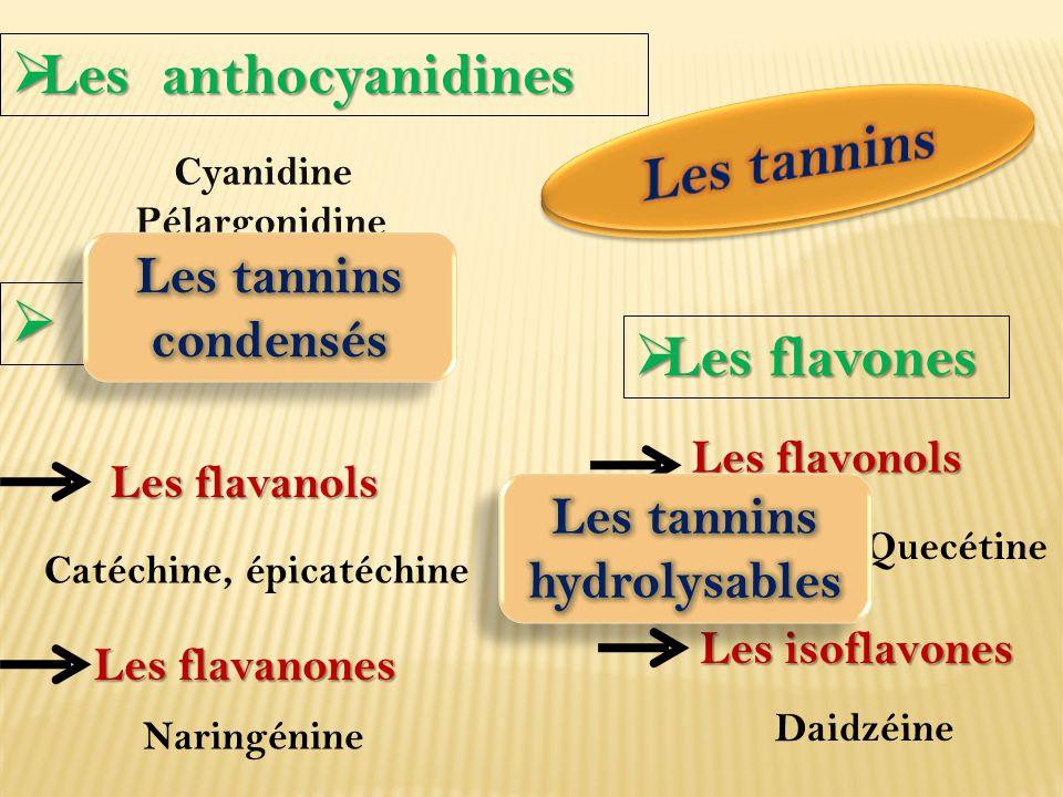 Les tannins hydrolysables