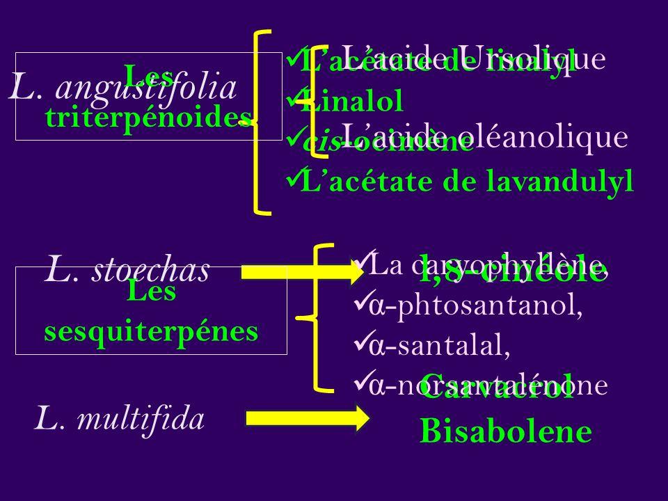 L. angustifolia L. stoechas l,8-cinéole L'acide Ursolique