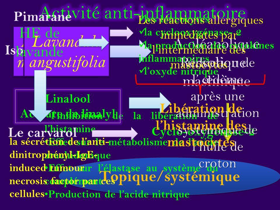 Libération de l'histamine des mastocytes