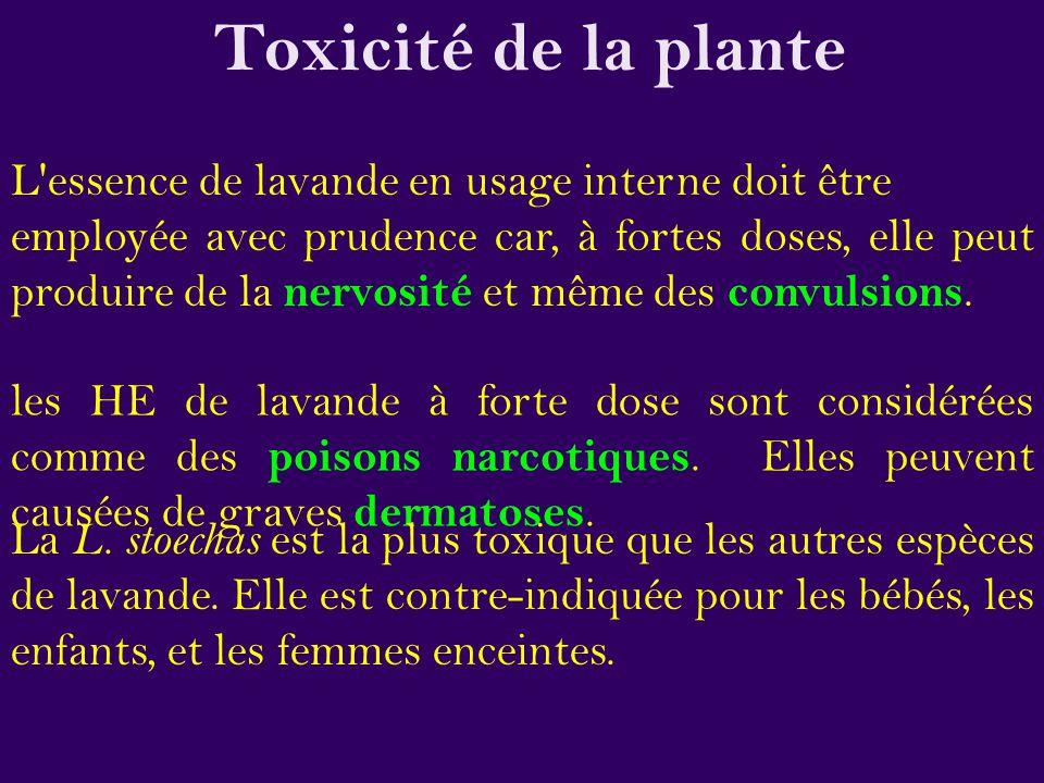 Toxicité de la plante L essence de lavande en usage interne doit être