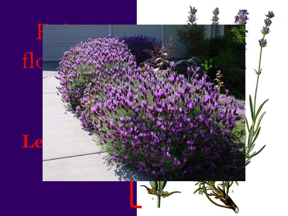 Epis floraux Les fleurs