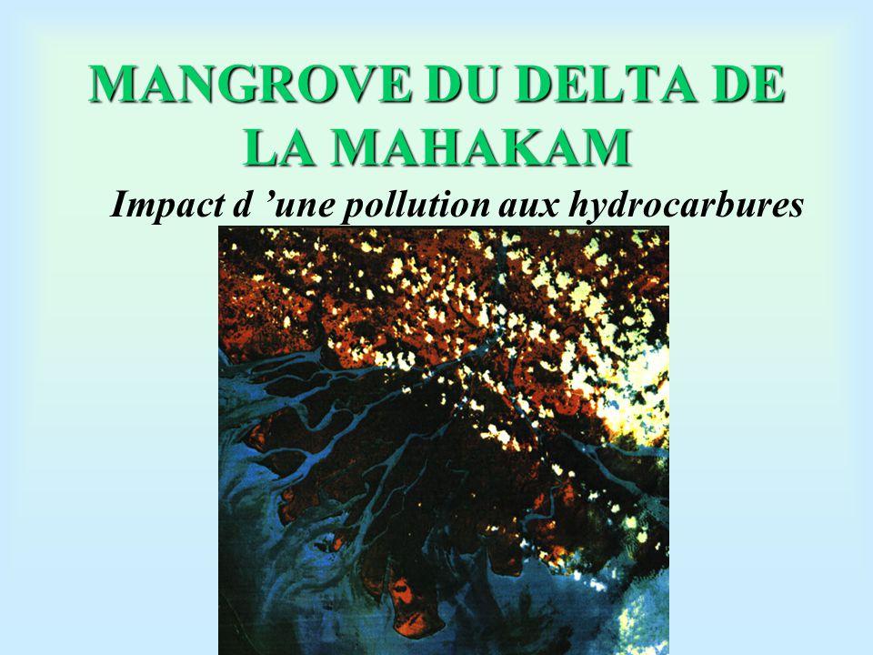MANGROVE DU DELTA DE LA MAHAKAM