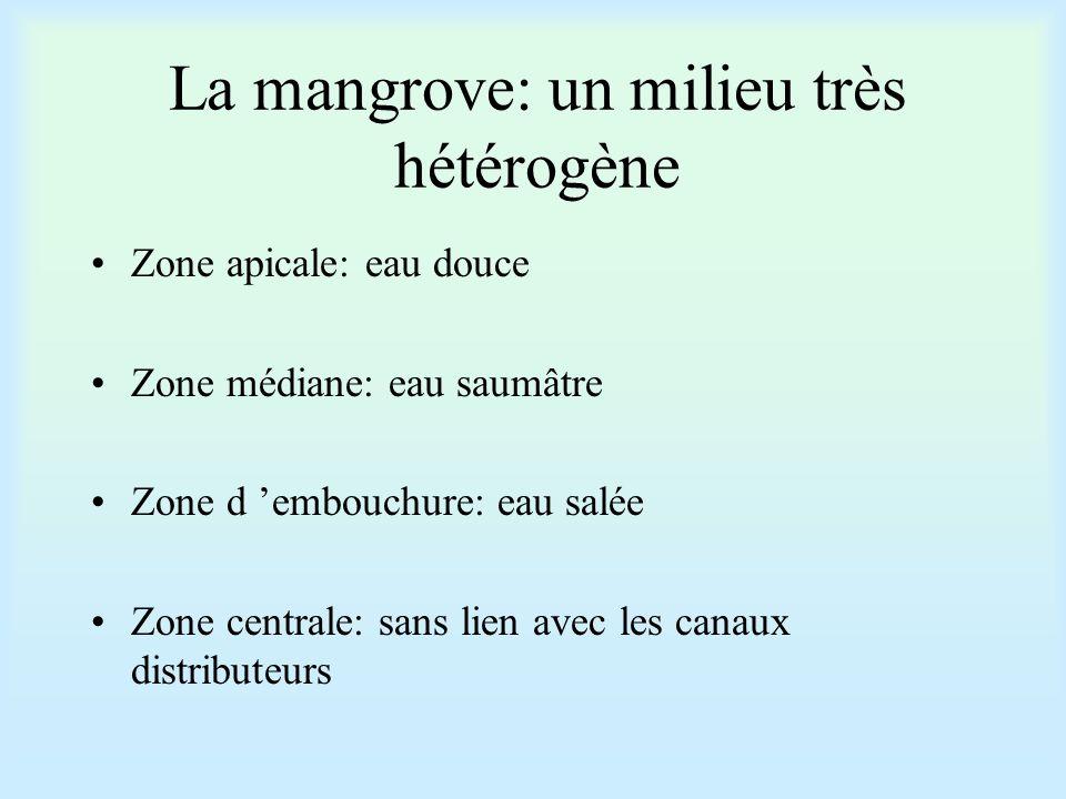 La mangrove: un milieu très hétérogène