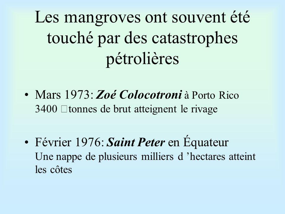 Les mangroves ont souvent été touché par des catastrophes pétrolières