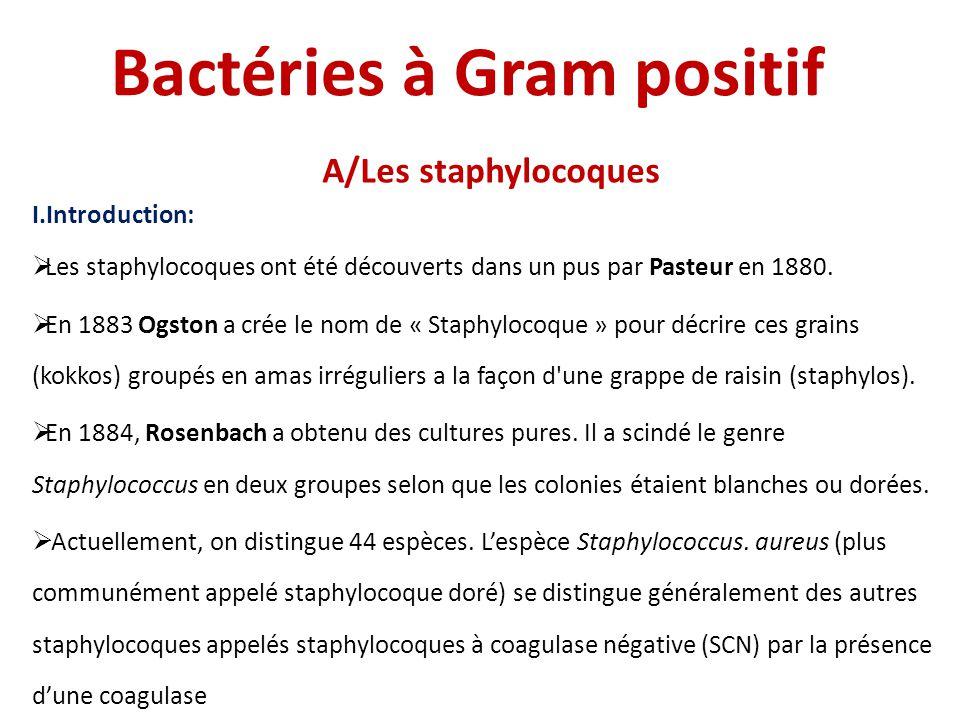 Bactéries à Gram positif
