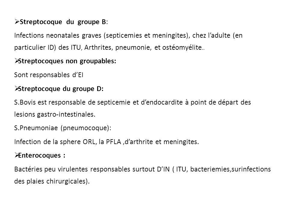 Streptocoque du groupe B:
