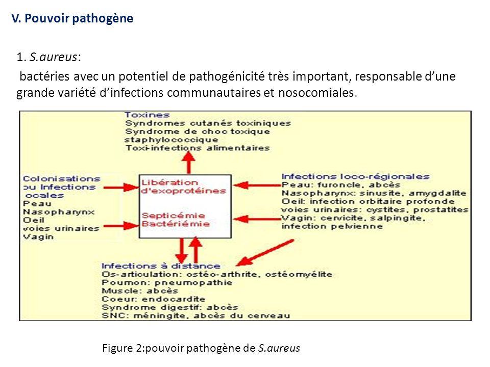 V. Pouvoir pathogène 1. S.aureus: