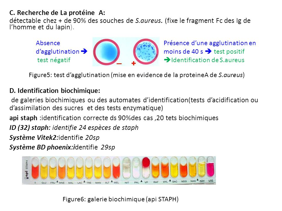C. Recherche de La protéine A:
