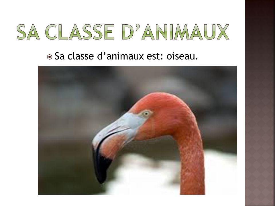 Sa classe d'animaux est: oiseau.