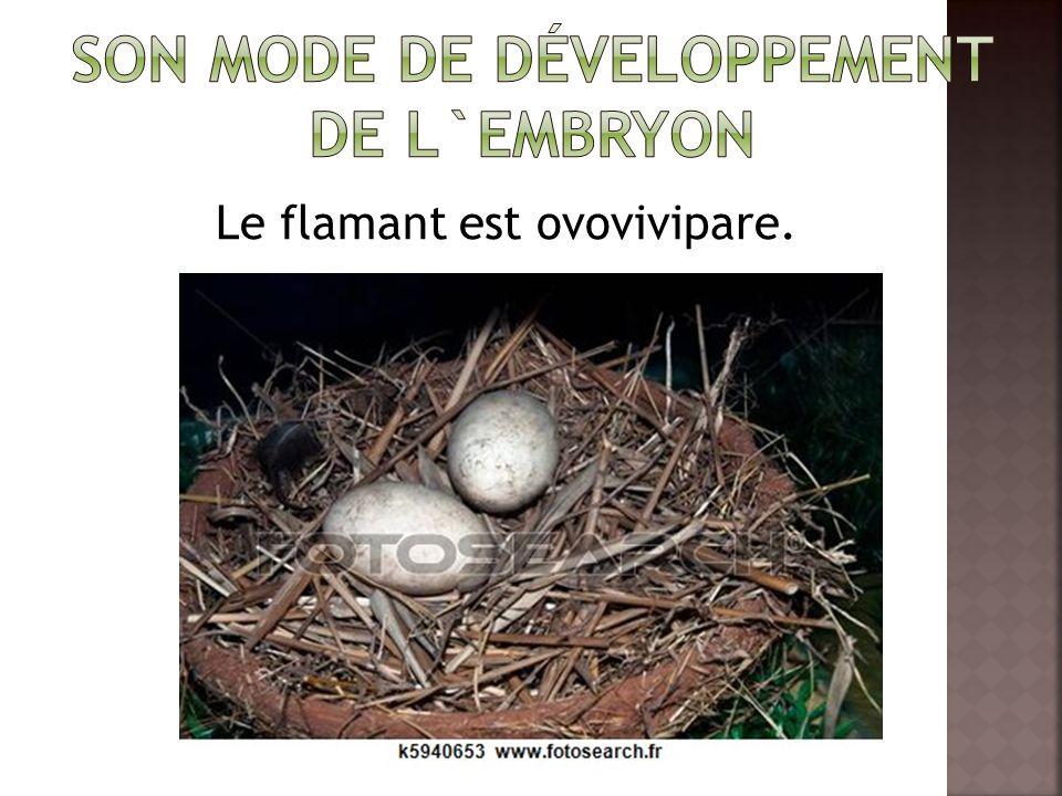 Son mode de développement de l`embryon