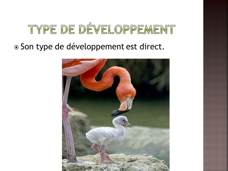 Type de développement Son type de développement est direct.