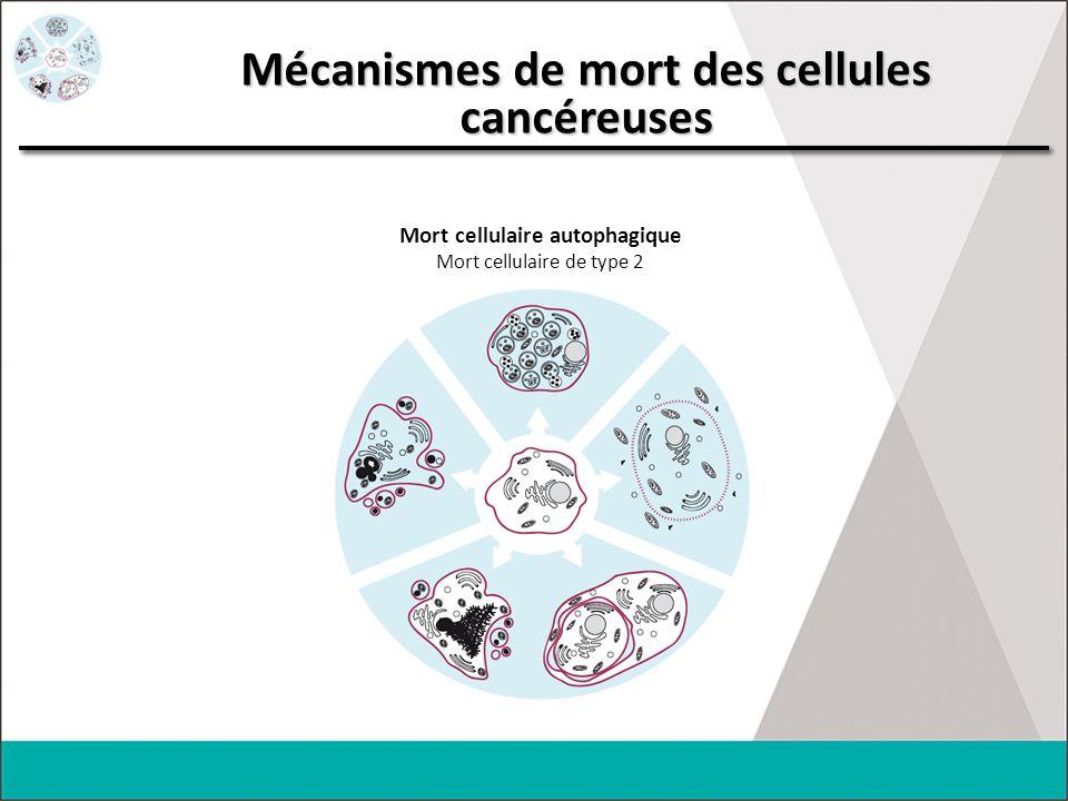 Mécanismes de mort des cellules cancéreuses