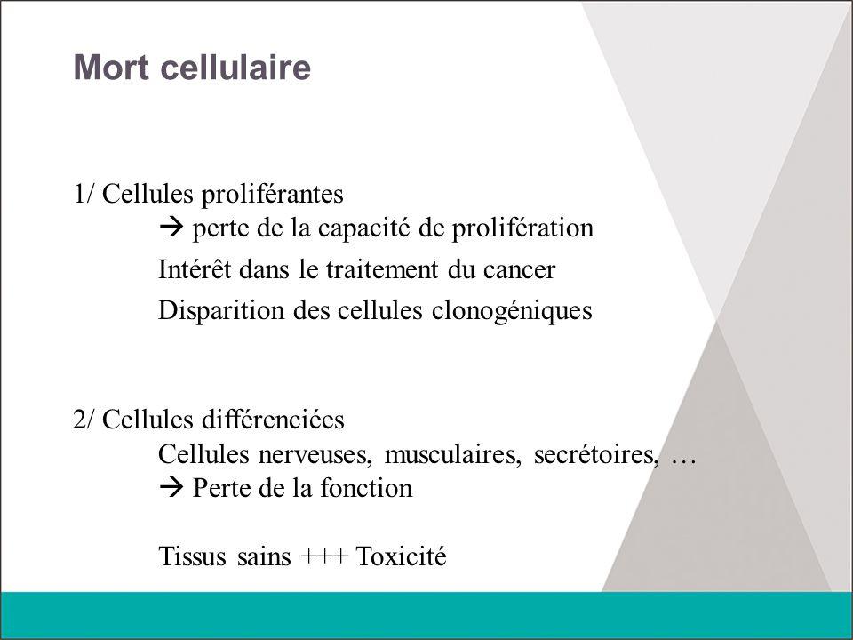 Mort cellulaire 1/ Cellules proliférantes