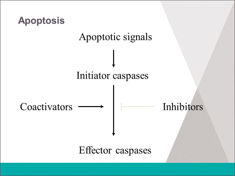 Apoptotic signals Initiator caspases Coactivators Inhibitors