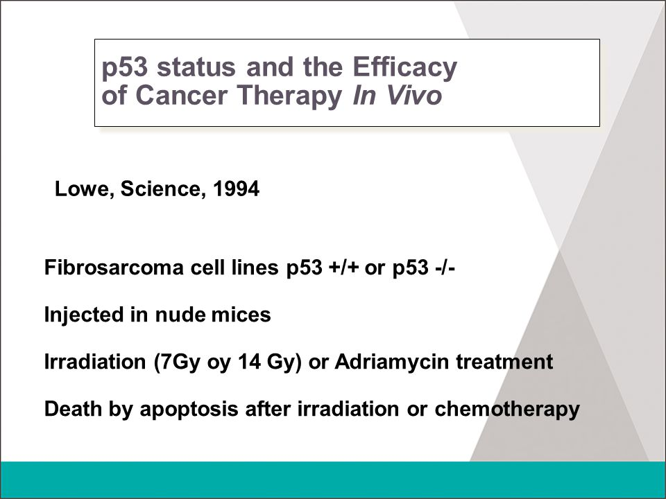 p53 status and the Efficacy of Cancer Therapy In Vivo