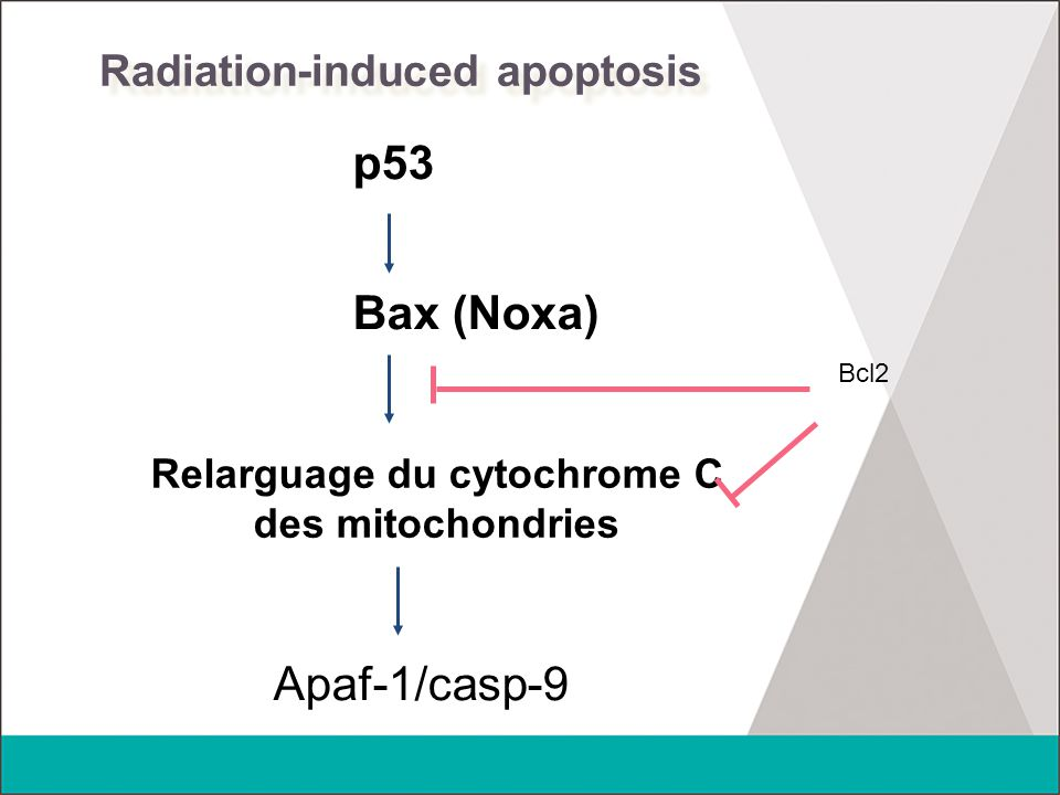 Radiation-induced apoptosis