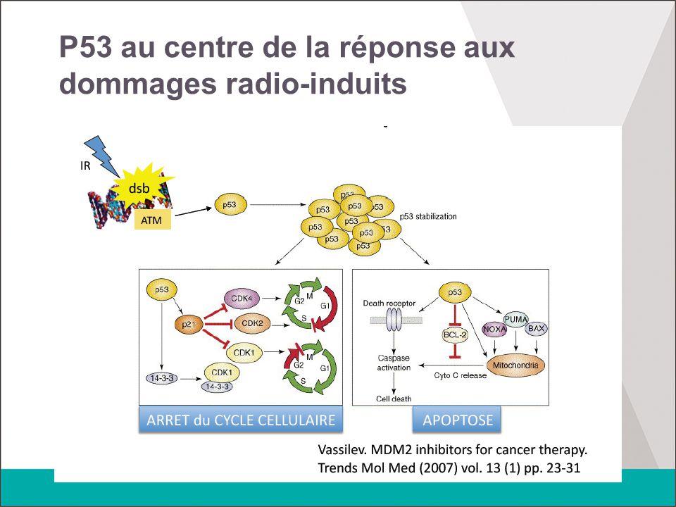 P53 au centre de la réponse aux dommages radio-induits