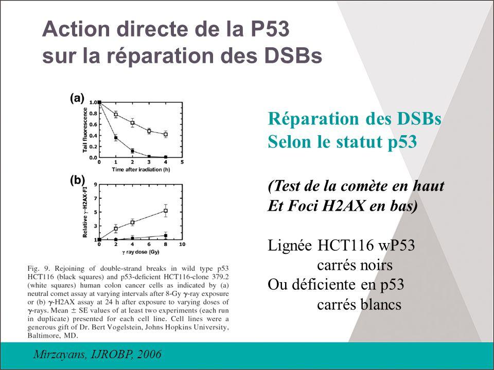 Action directe de la P53 sur la réparation des DSBs